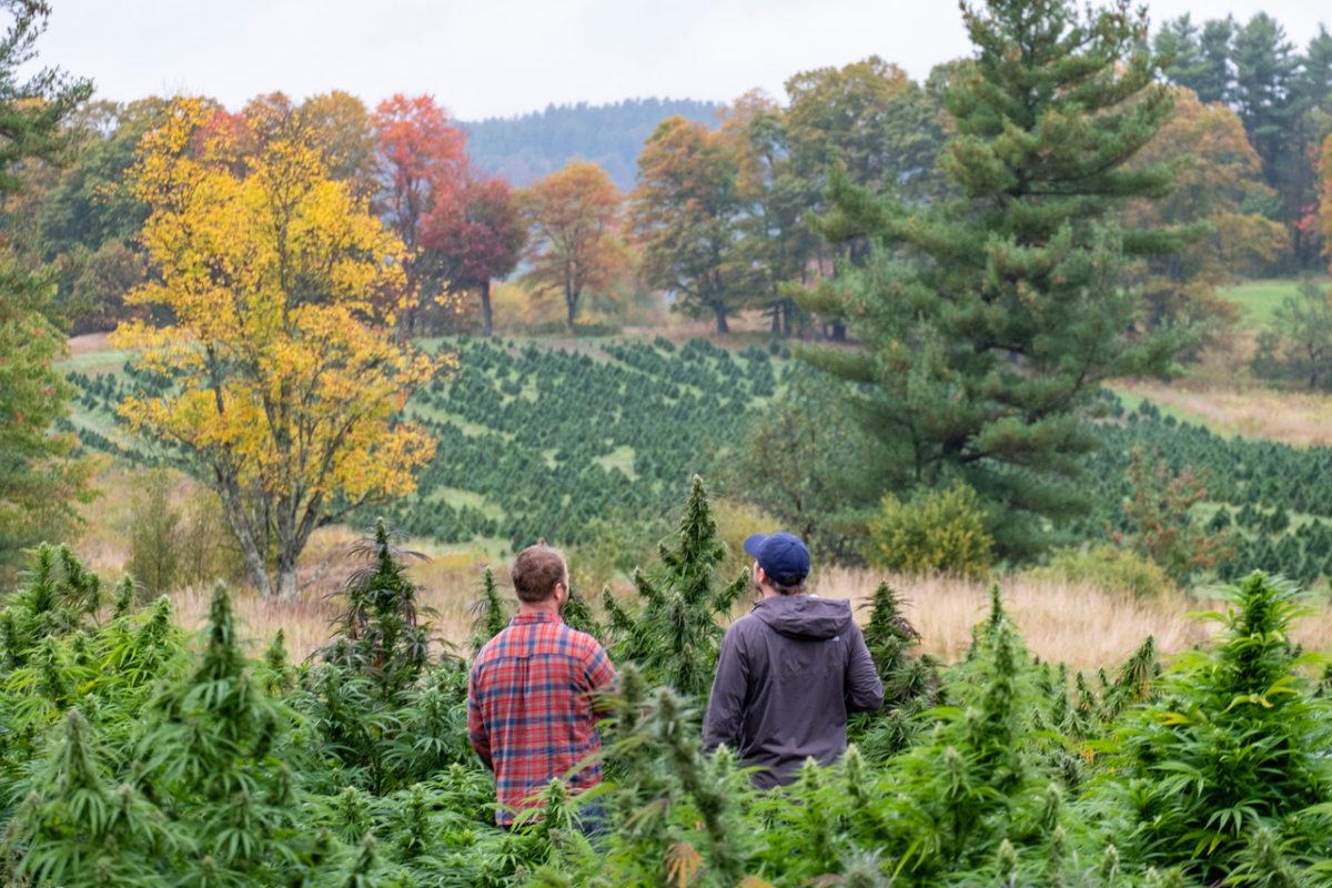 Overhead view of Pete's farm