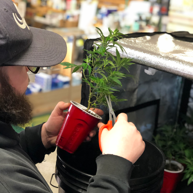 Plant Clipping